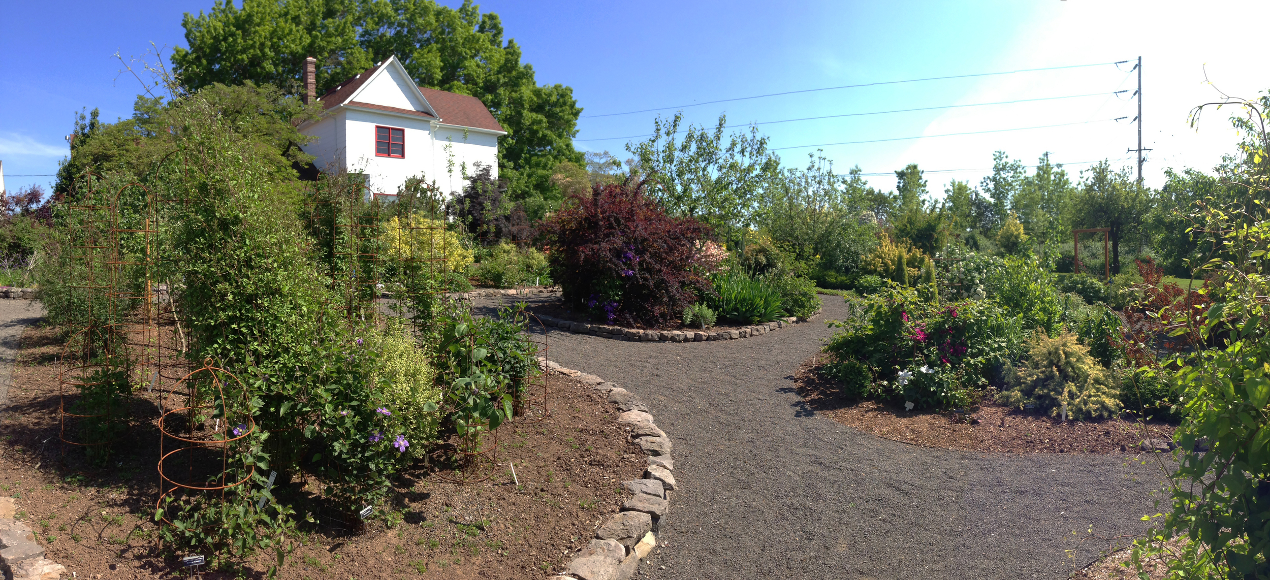 The Rogerson Clematis Collection is located at Luscher Farm, part of Lake Oswego's Parks and Recreation Department.