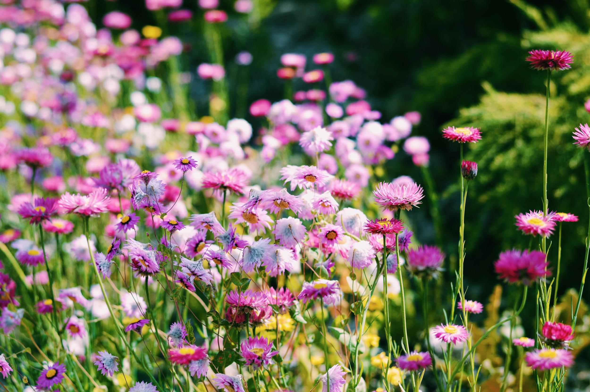 Identify flowers