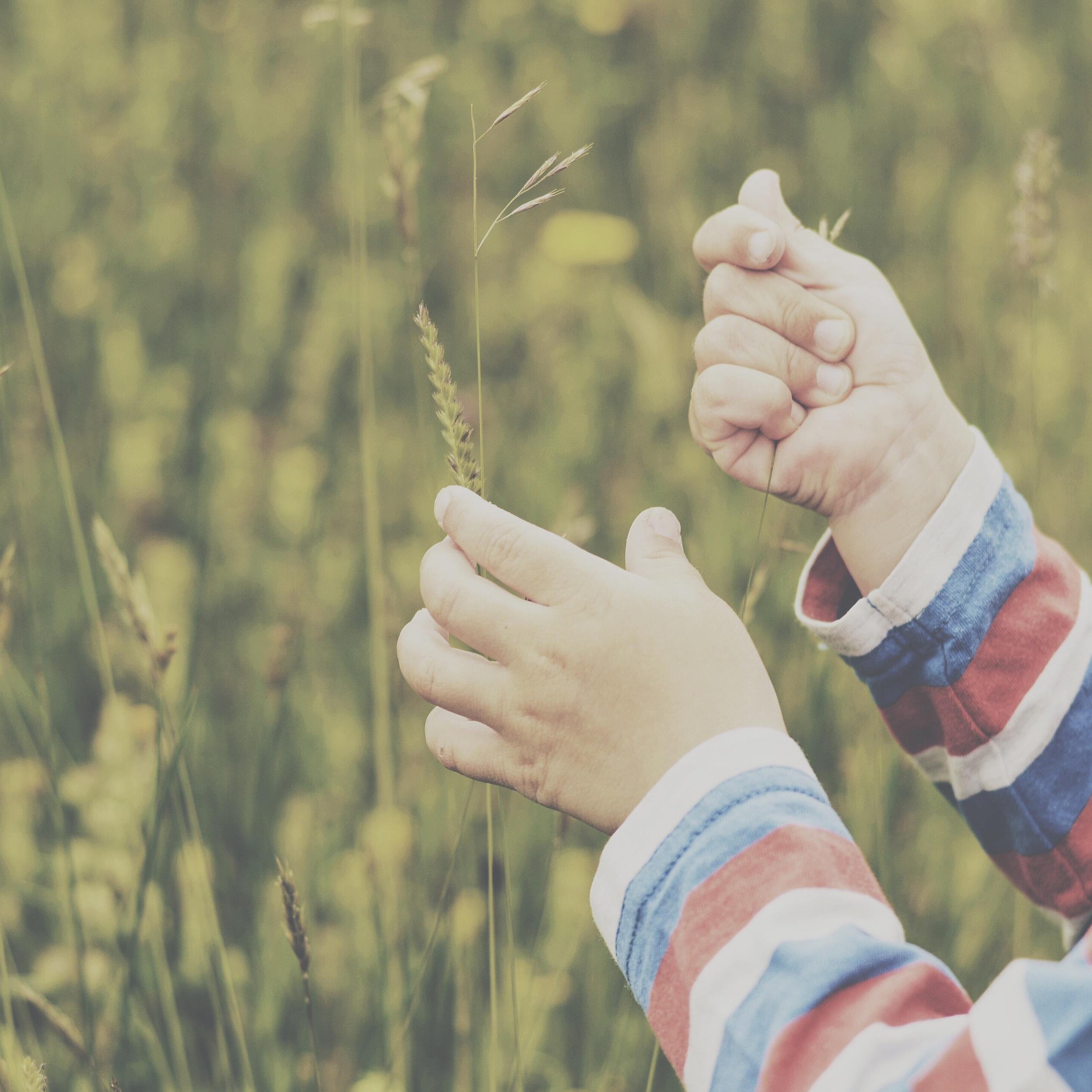 Explore a meadow