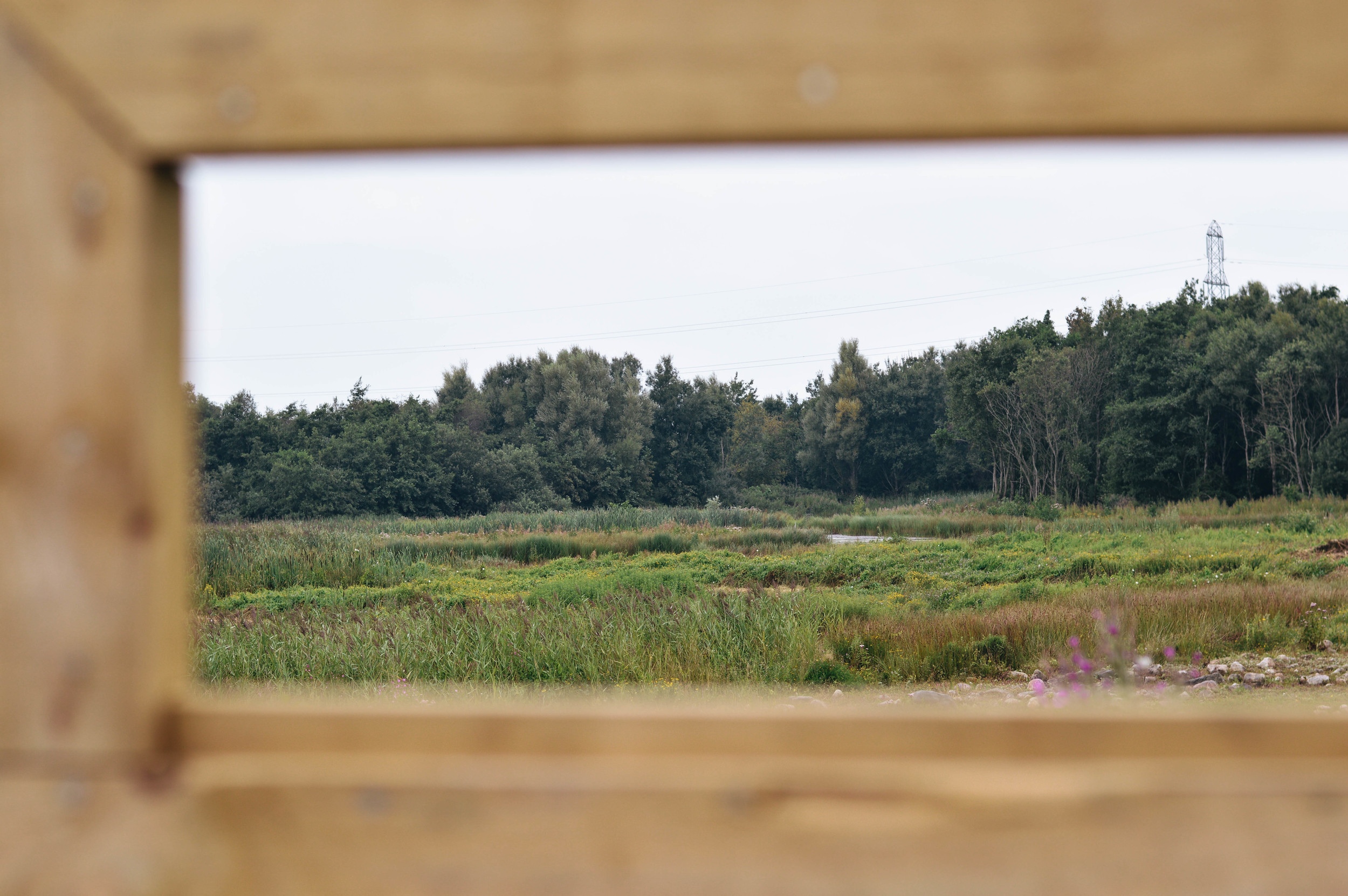 The view beyond the hide.