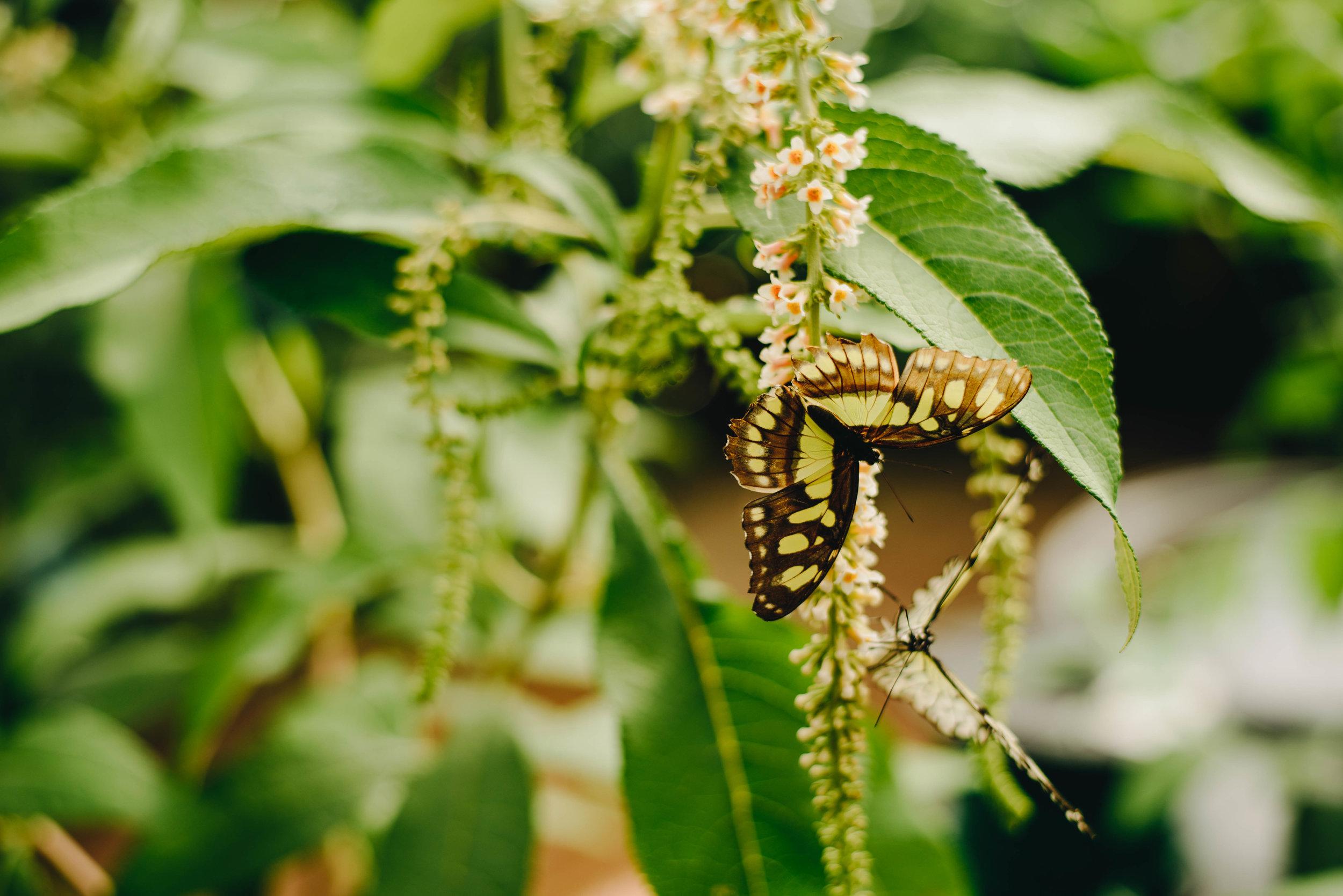 BotanicGardens-0070.jpg