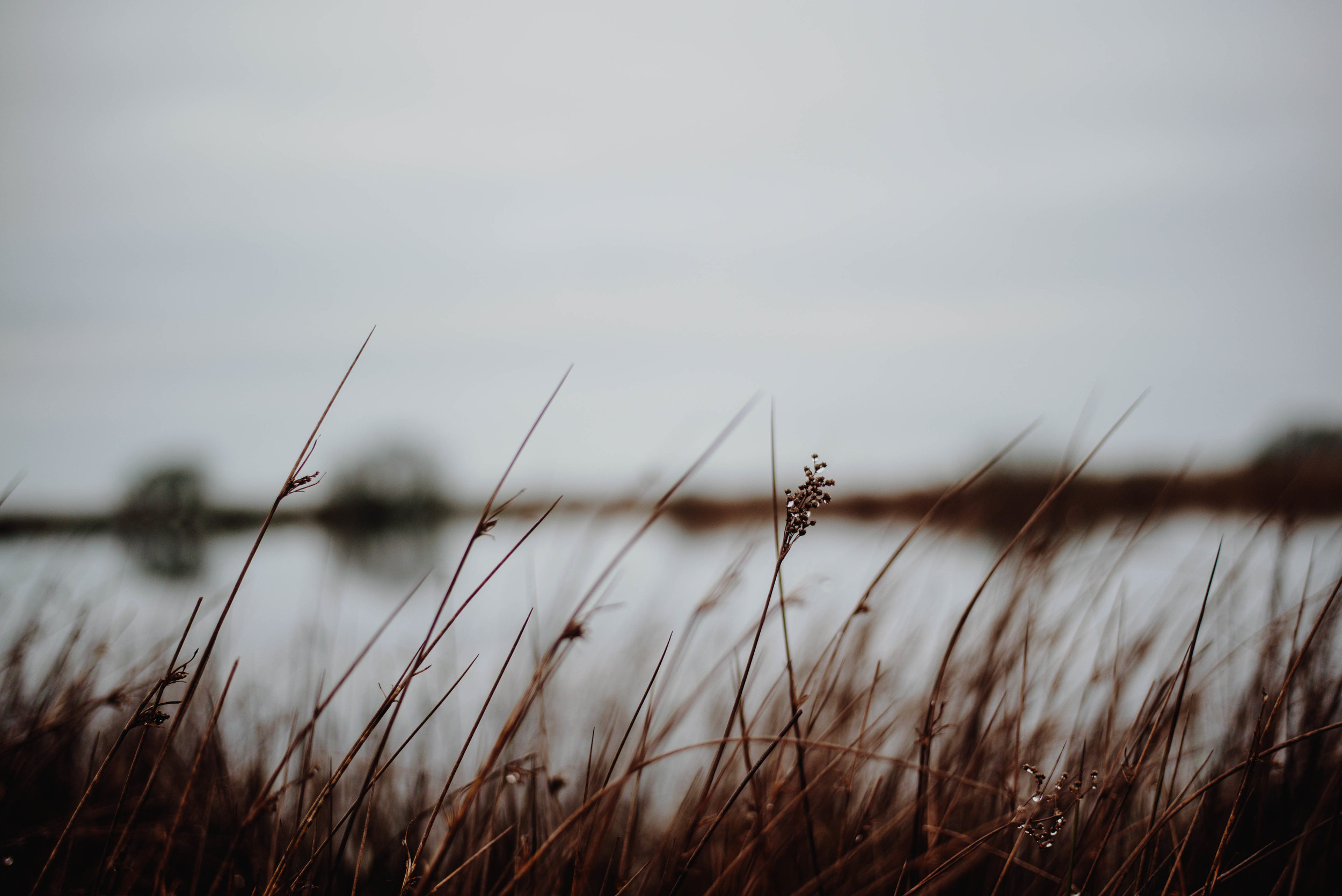 Don't be afraid to look for different angles and perspectives.  SS:1/640 F1.8 ISO:160 WB: Cloudy. 50mm Lens. Single Spot Focus.