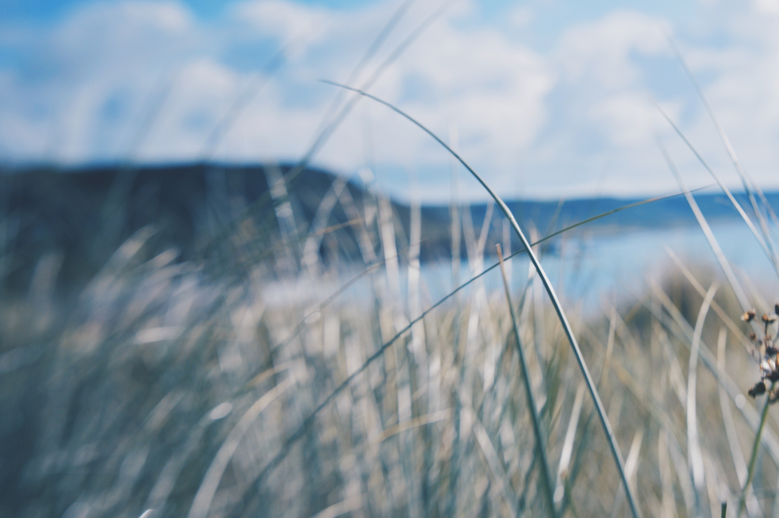 Lensbaby and Grass make a good combo.