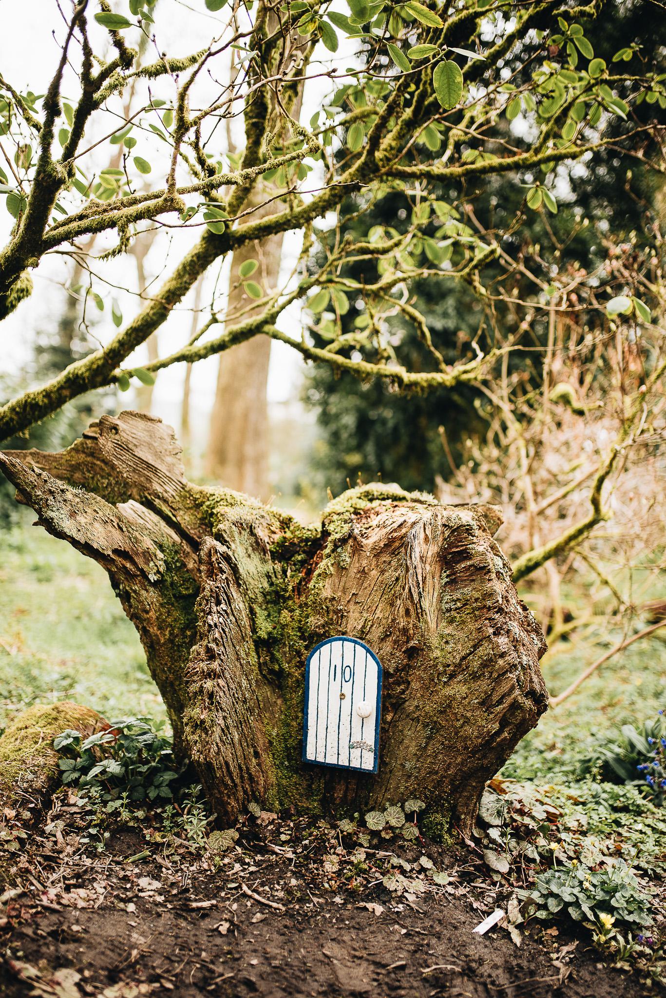 Fairy doors hidden in the woods.