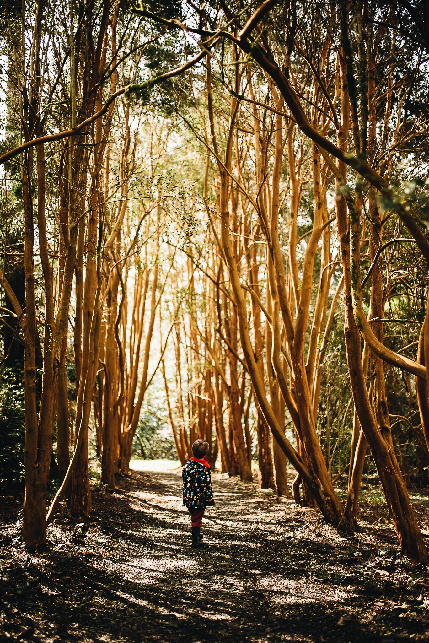 Beuatiful tree lined pathways.