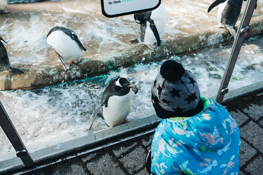 Ezra and a penguin having a little chat.