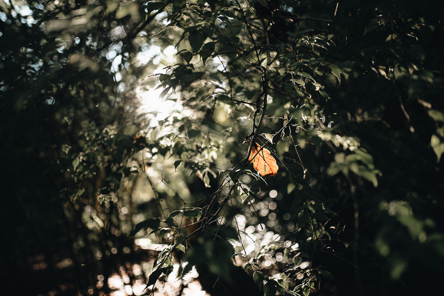 OurBeautifulAdventure-GettingOutdoorsinWales-October-websize-7260.jpg