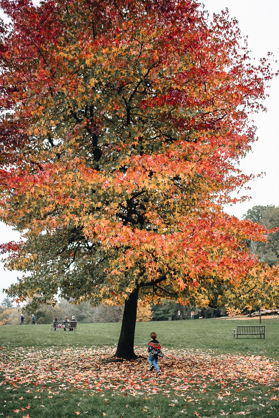 OurBeautifulAdventure-GettingOutdoorsinWales-October-websize-0134.jpg