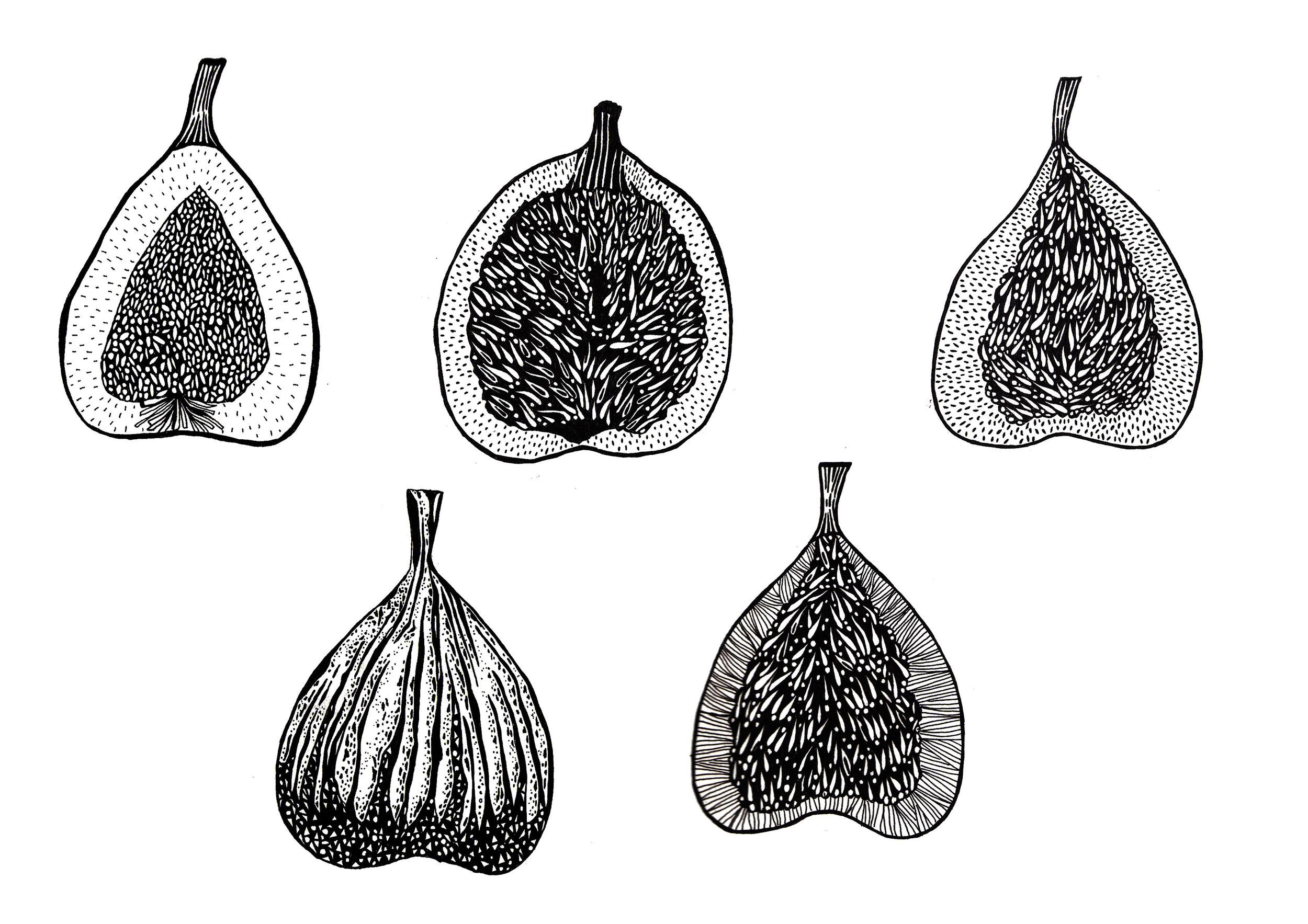 figs copy.jpg