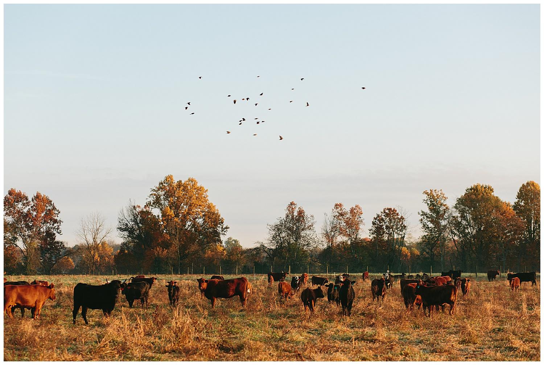 trent.and.kendra.photography.autumn.kentucky.foxhollow-50.jpg
