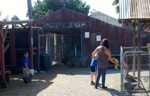 Feeding the animals at McGrath Family Farm.