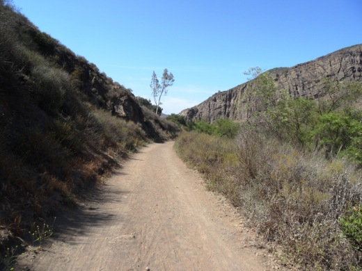 The Hill Canyon Trail is as flat as they come. I see bikers, hikers and runner back here.