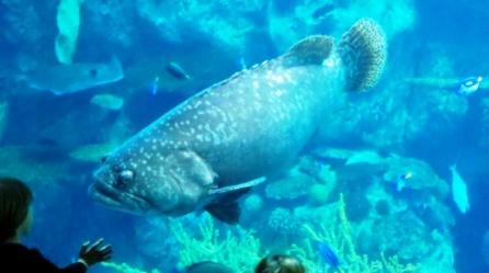 AquariumPacific3.jpg