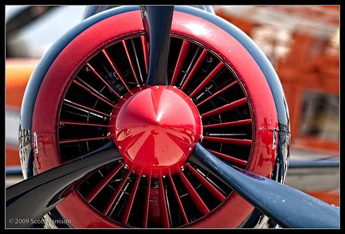 Wings_ScottH_4.jpg