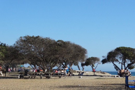 Trees shade the picnic tables at Sycamore Cove Beach
