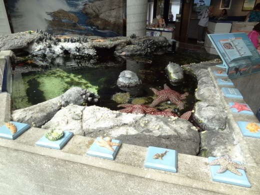 Indoor tidepool in the Visitor Center always grabs the kids' attention, along with other displays.