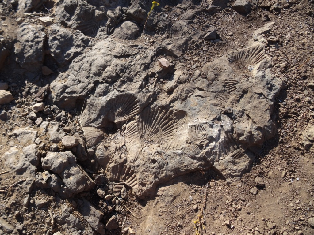Fossil markings on Fossil Trail