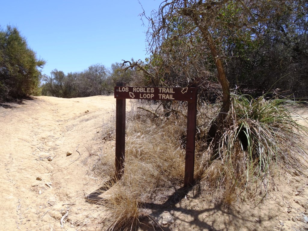 The loop trail continues on the left.