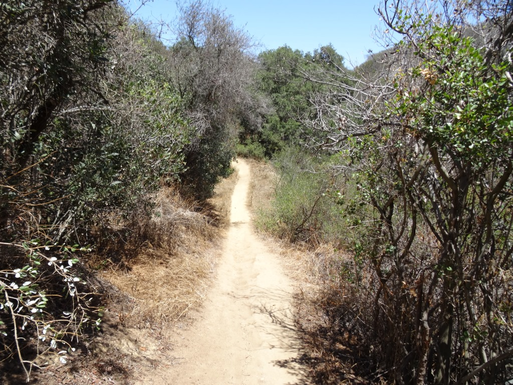 One of the moderate hills on the trail.