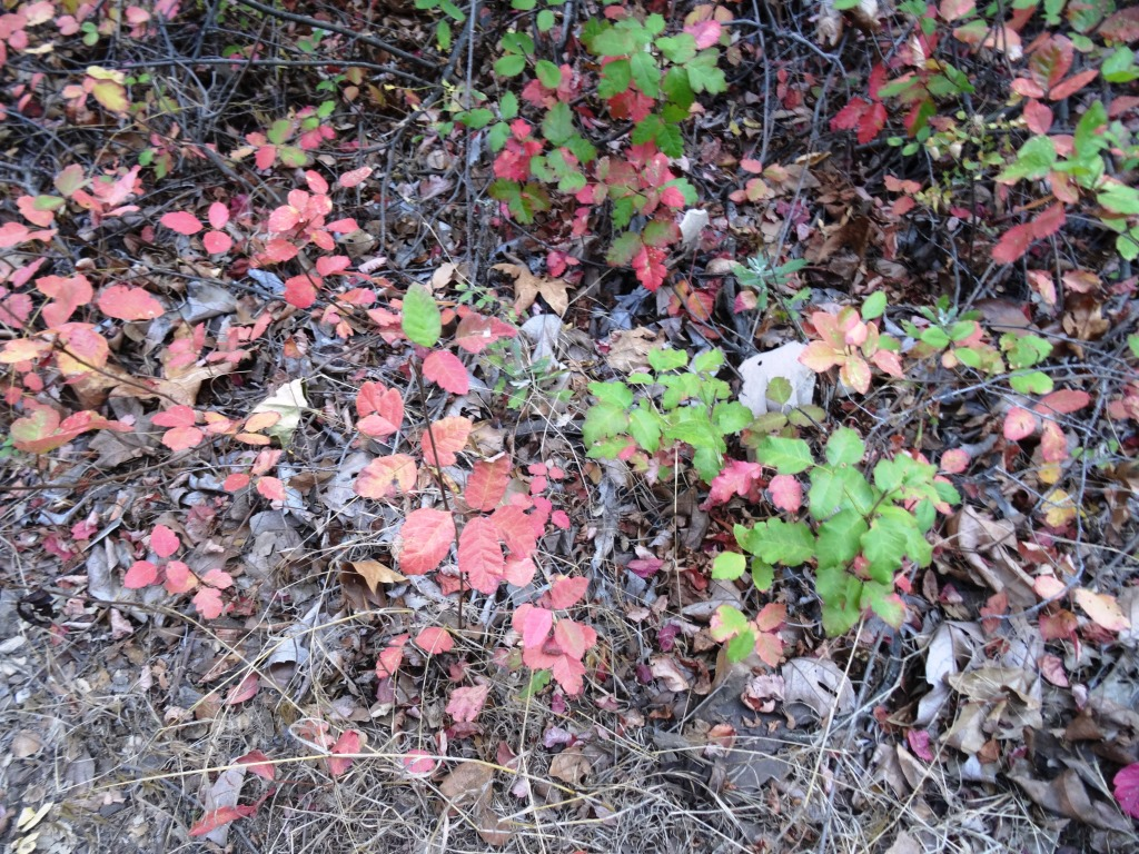 Watch out for the poison oak on the sides of the trail...there's plenty of it but you can avert it if you are aware.
