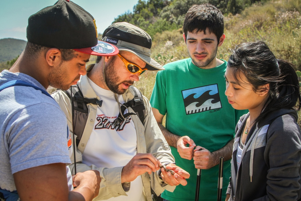 Students working with assistant professor of biology Kristopher Karsten on lizard research (Photo credit: Brian Stethem)