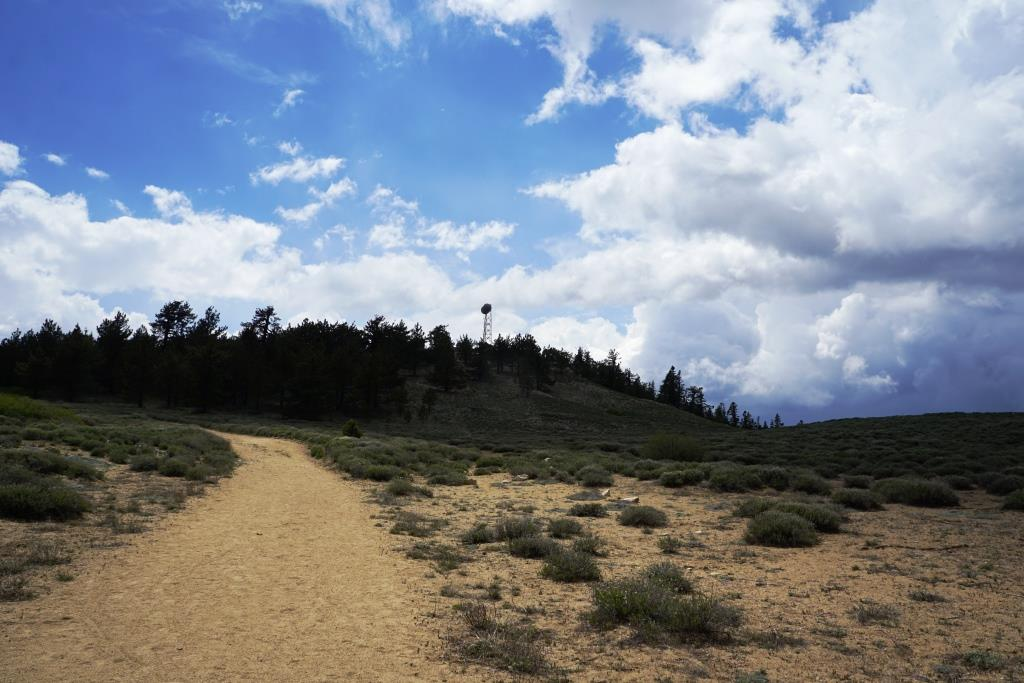 At this juncture of the trail, you will notice a radio tower up ahead at the summit of Mt. Pinos