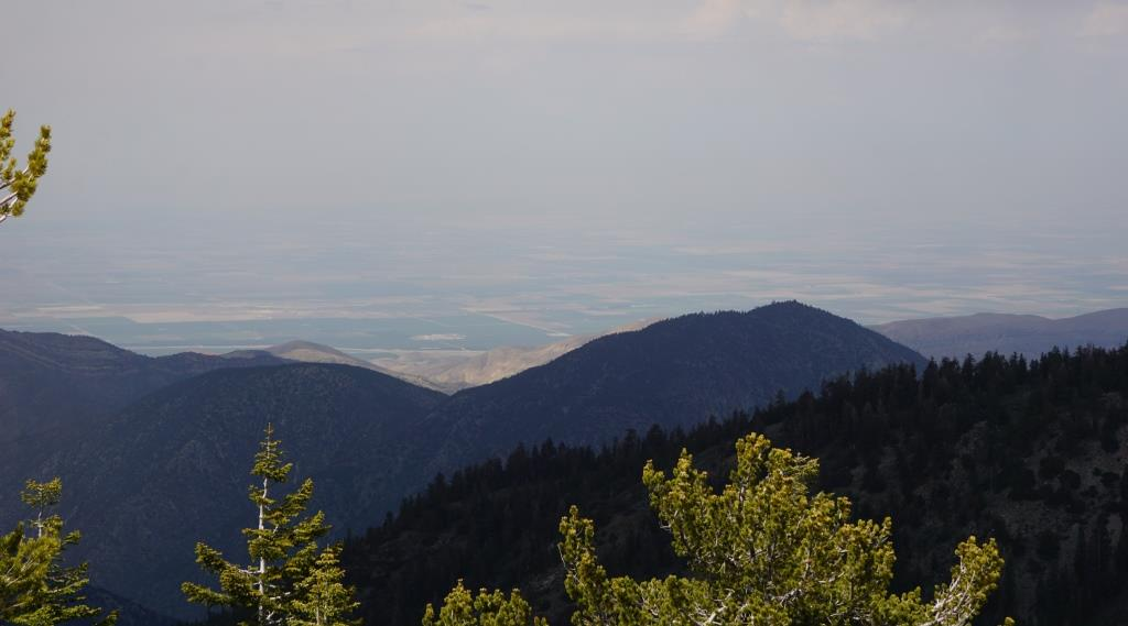 A view from Mount Pinos summit.