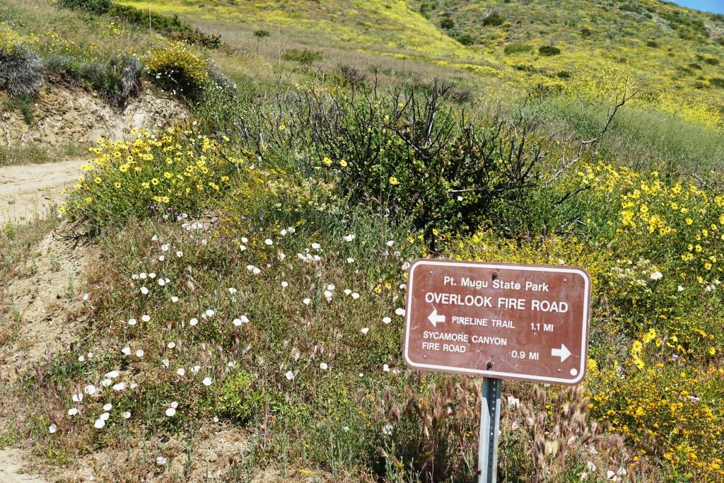 The wonderful scent of wildflowers off of the Scenic Trail, seen here near the junction of Overlook Fire Road, is well worth going out of your way for in the spring.