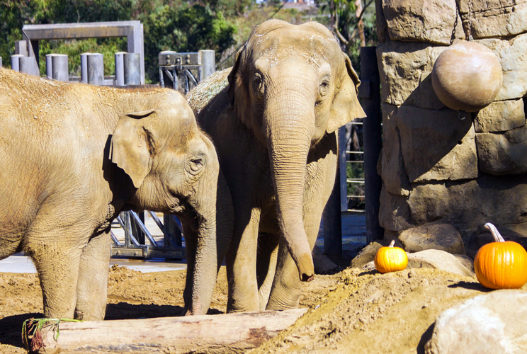 Sujatha pictured here on the right (Photo Credit: SB Zoo)