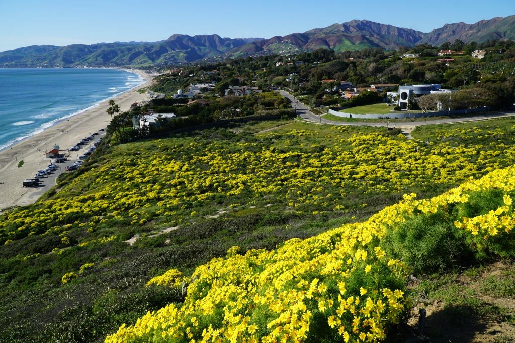 The view west towards Zuma Beach from the top of the bluff.