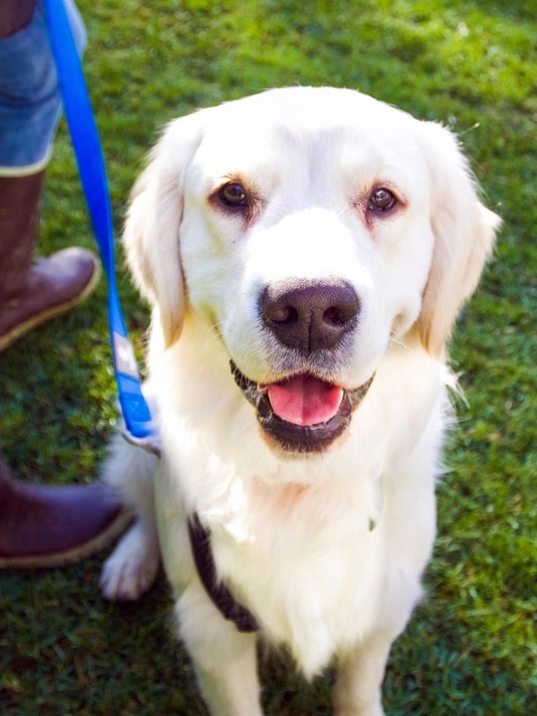 Bradley, the Santa Barbara Zoo's first Ambassador Dog.