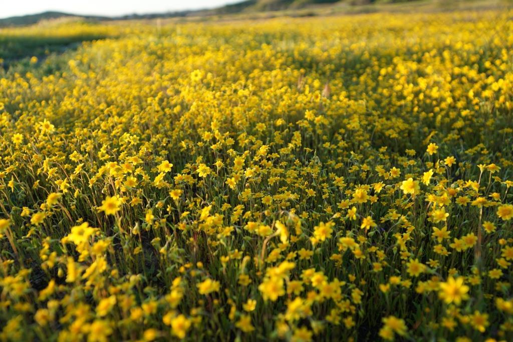 Westlake Vista Flowers 3.13.19 2.JPG