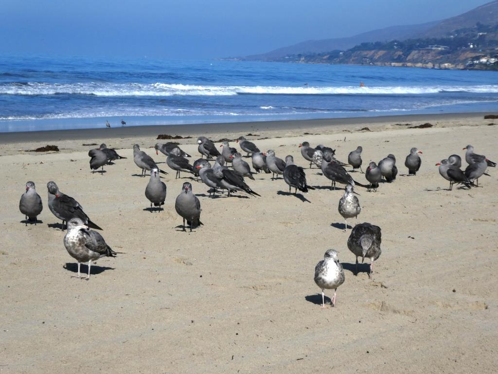 Seabirds like it here too.
