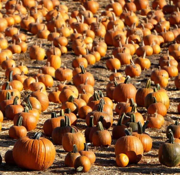 Ventura Halloween Events 2020 2020 Halloween Guidance Issued by Ventura County Public Health