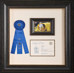framed certificate and blue ribbon