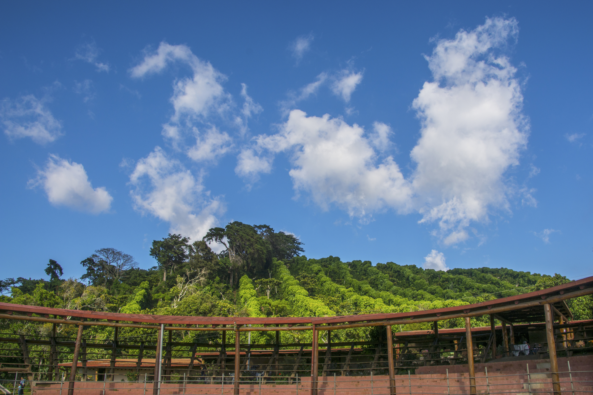 Farmers plant trees in lines to shade coffee plants. And those clouds! (Quezalapa, El Salvador)