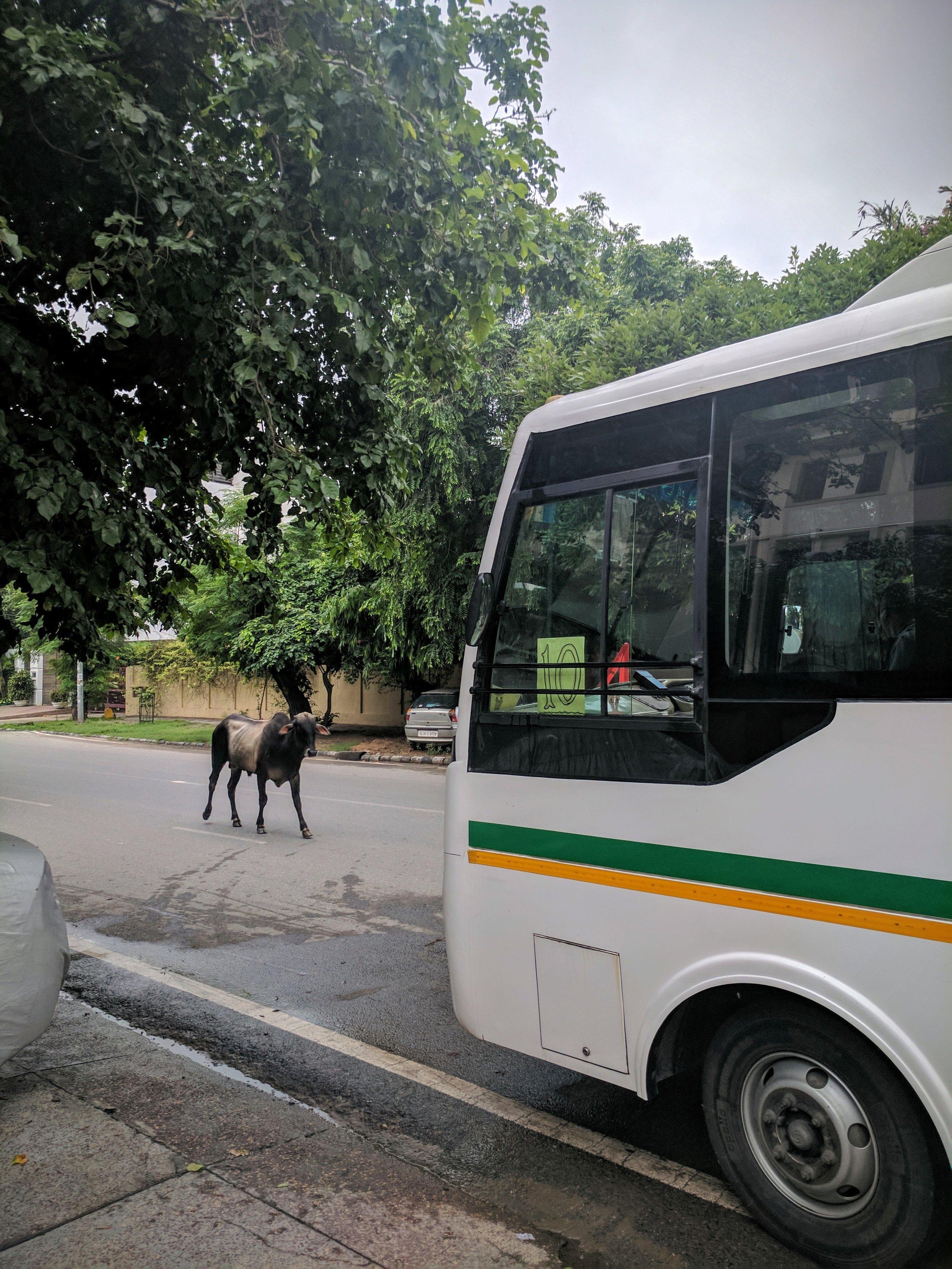"""""""YOU SHALL NOT PASS!!!!"""" (Vasant Vihar, Delhi, India; Aug 2017)"""