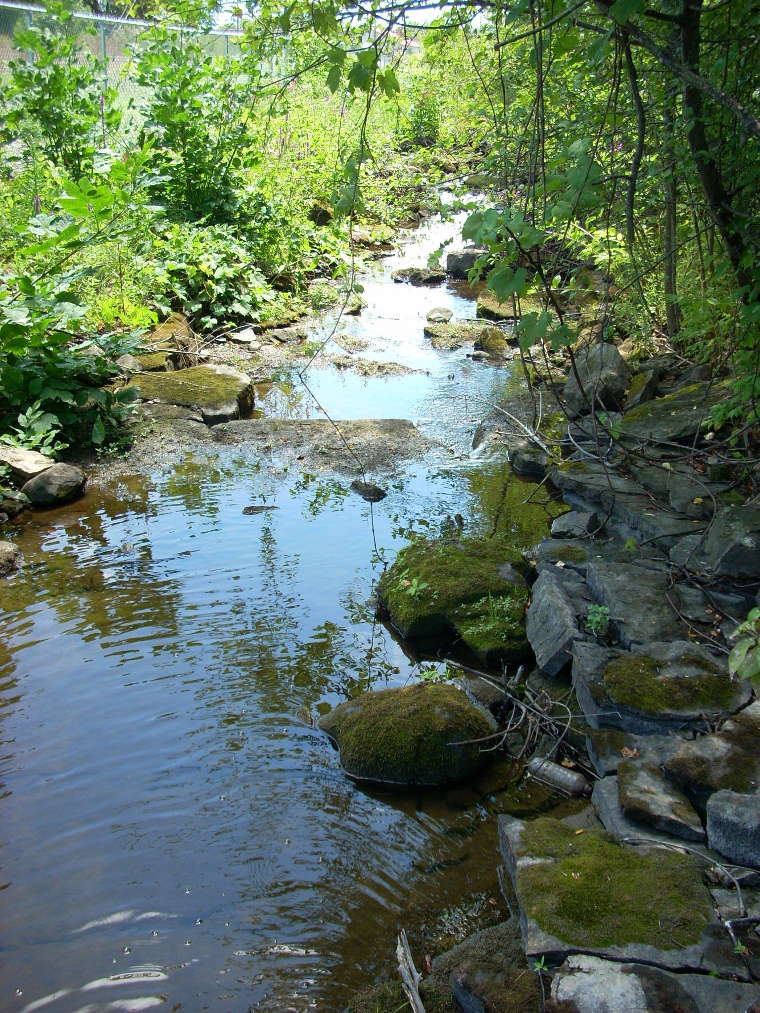 Trail follows Buell's Creek near St. Lawrence College - 25 July 2011.JPG