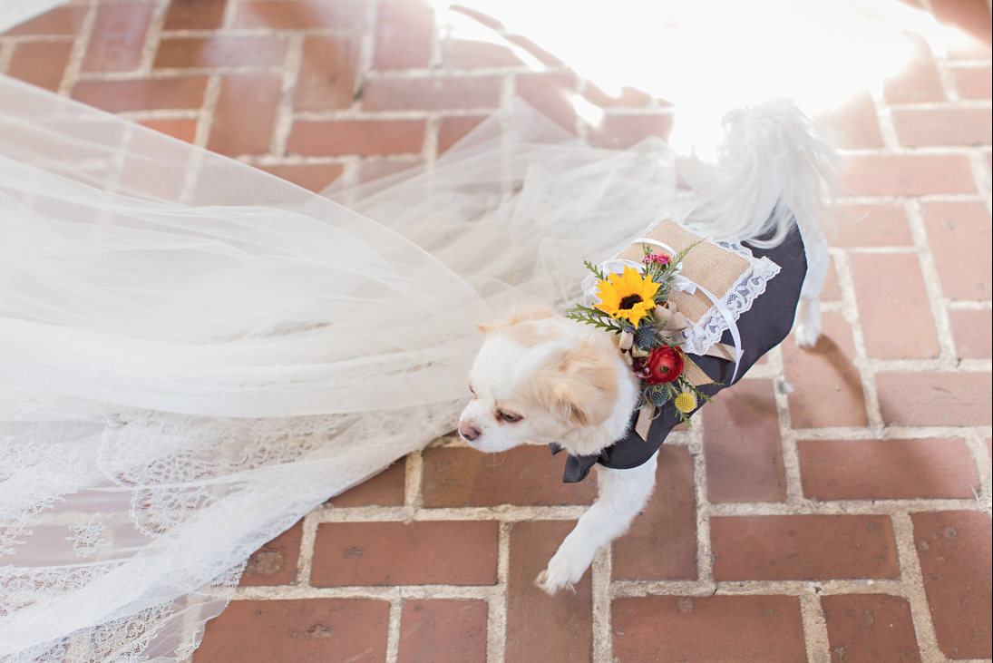 katie-mcgee-photography-ivory-and-beau-bridal-boutique-anna-campbell-wedding-dress-anna-campbell-bridal-indie-bride-savannah-weddings-savannah-bridal-boutique-savannah-wedding-gowns-savannah-bridal-downtown-savannah-wedding-16.png