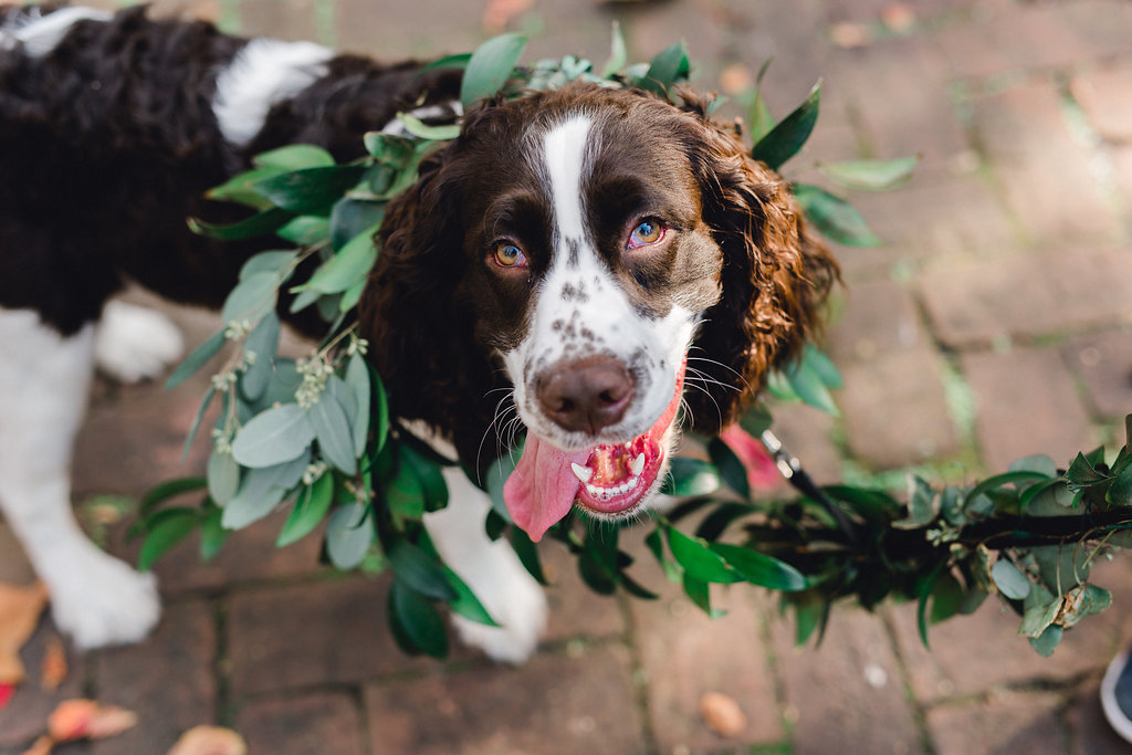 dog-flower-leash-greenery-leash-dog-flower-crown-dog-flower-collar-ivory-and-beau-savannah-florist-savannah-wedding-florist-ships-of-the-sea-wedding-inspiration.JPG