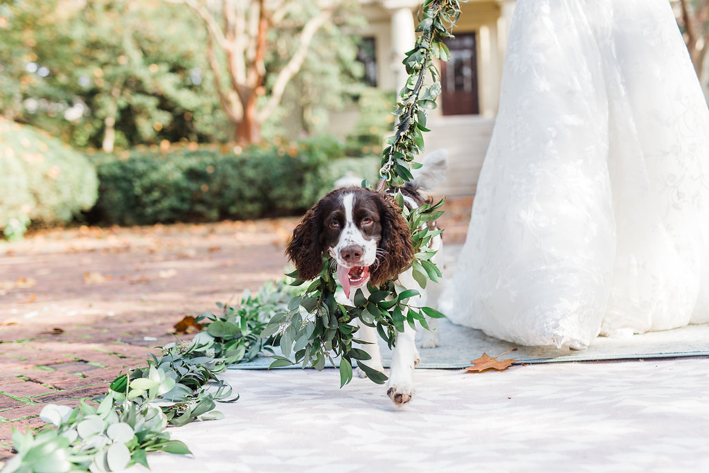 dog-ringbearer-ivory-and-beau-savannah-wedding-planner-savannah-florist-dog-flower-crown-dog-flower-leash-dog-greenery-leash-ships-of-the-sea-wedding-inspiration-ivory-and-beau.JPG
