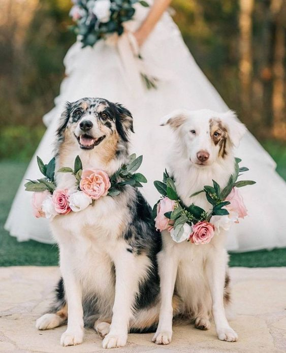 how-to-incorporate-your-dog-into-your-wedding-wedding-ideas-savannah-wedding-planner-savannah-florist-savannah-bridal-shop
