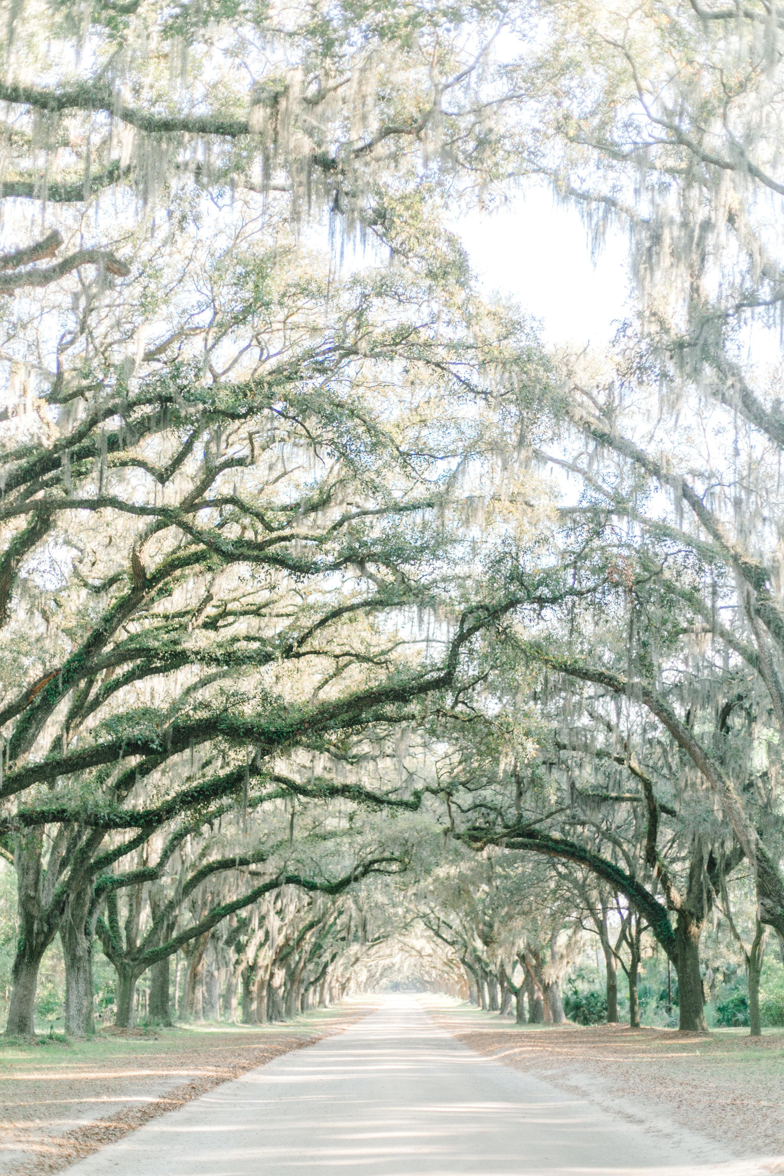 wormsloe-historic-park-wormsloe-savannah-georgia-wedding-inspiration-wormsloe-elopement-wormsloe-savannah-Selyciayangphotograpy-5.jpg