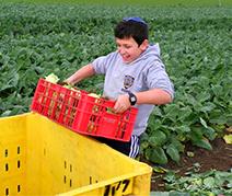 harvesting 2.jpg