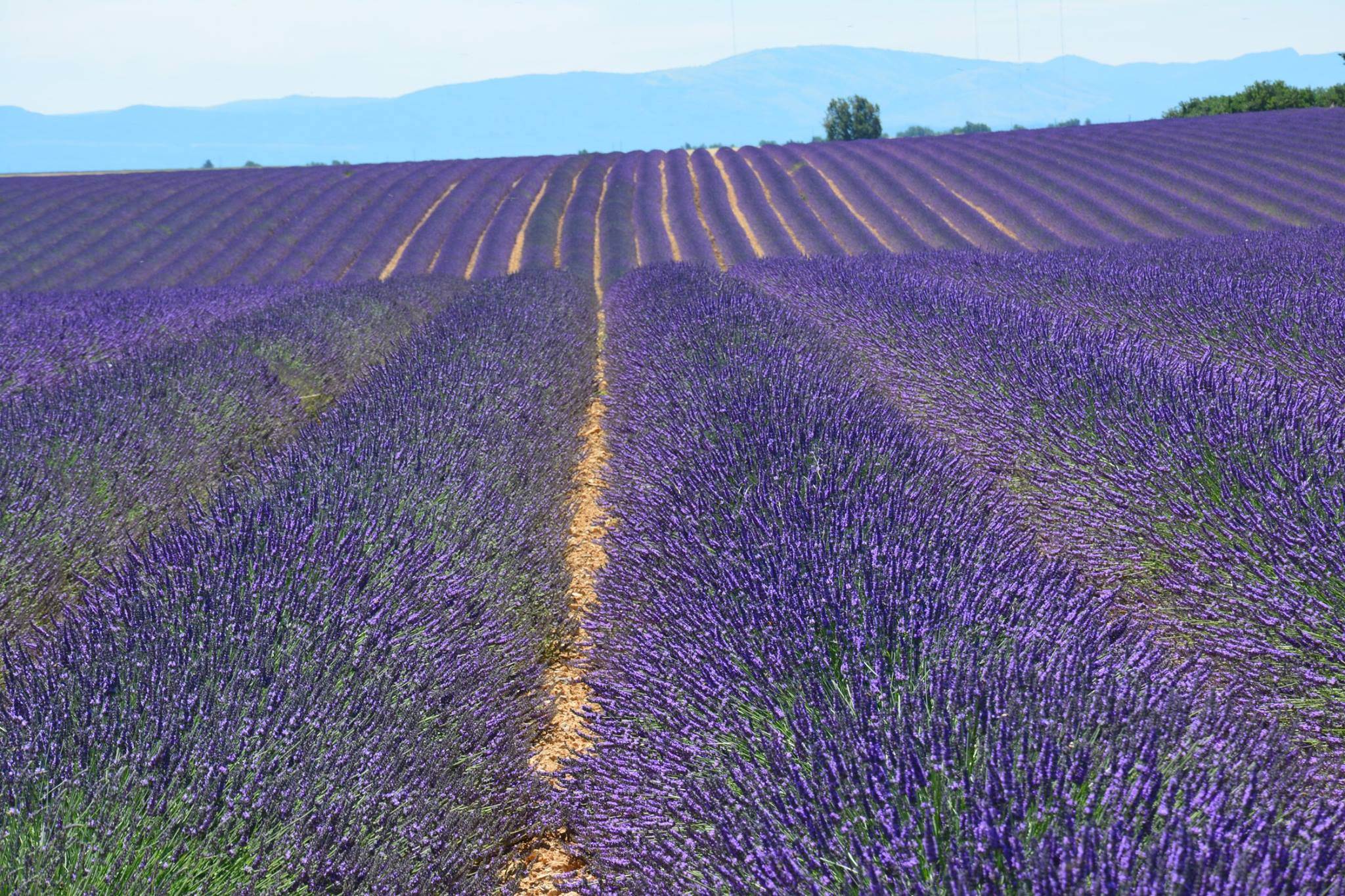 UNIQUE PROVENCE Private Tours & Excursions of Provence