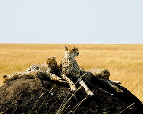 MICATO Safaris in Africa