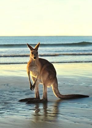 SWAIN DESTINTIONS                                     Custom Tours in Australia and Africa