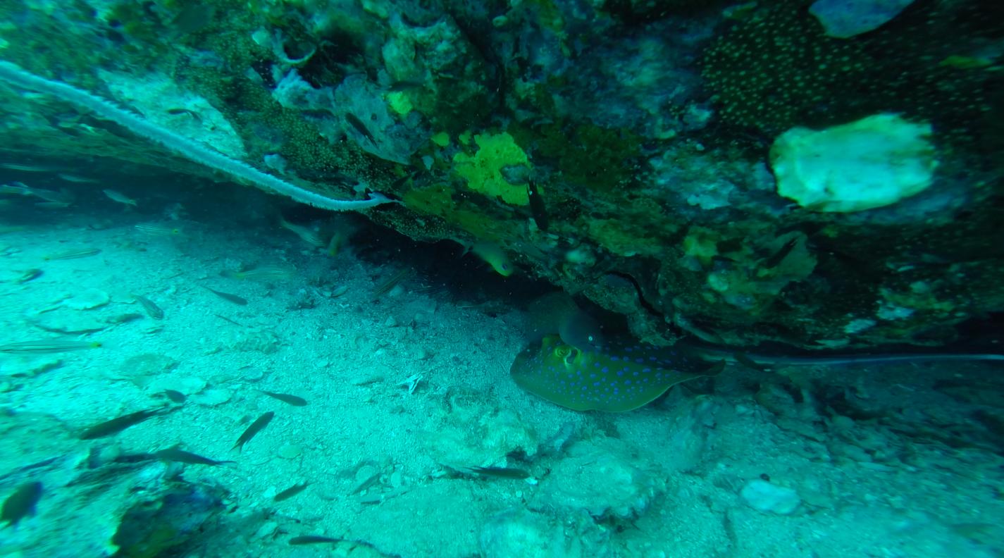 Stingray and Moray Eel