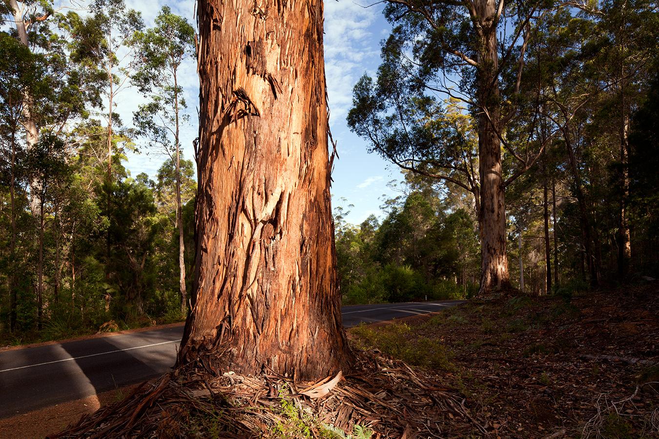 Fine art landscape photography australia trees WA.jpg