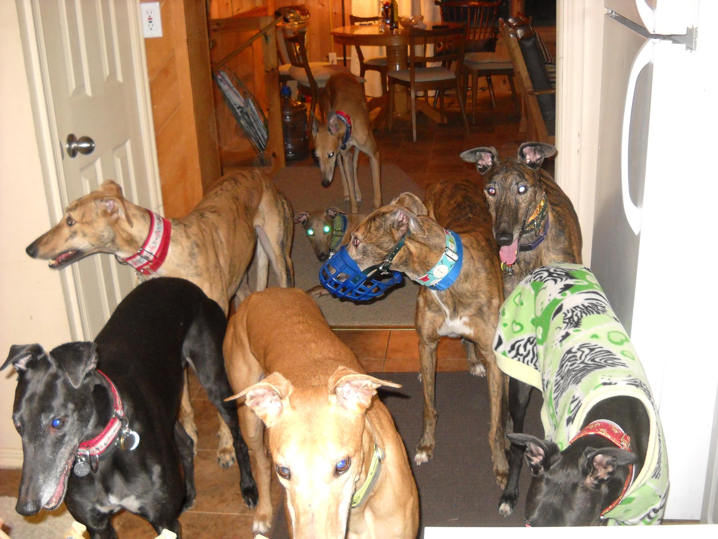 grey-hound-convention.jpg